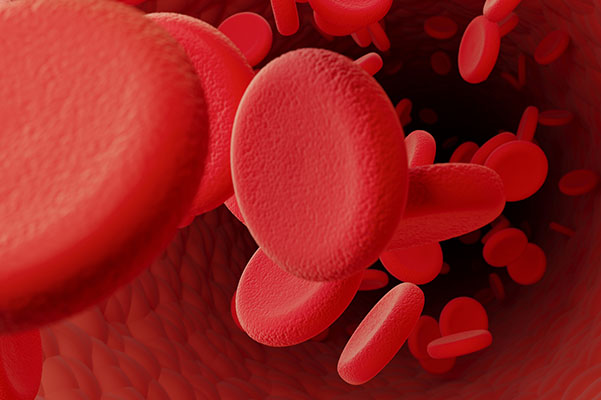 A microscopic view of red blood cells and platelets