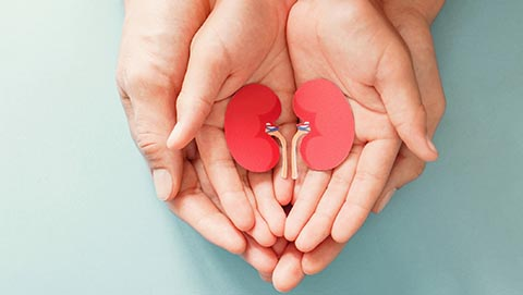 Two pairs of open hands holding a paper cutout out of a kidney